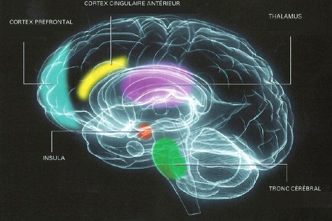 cerveau et neurosciences