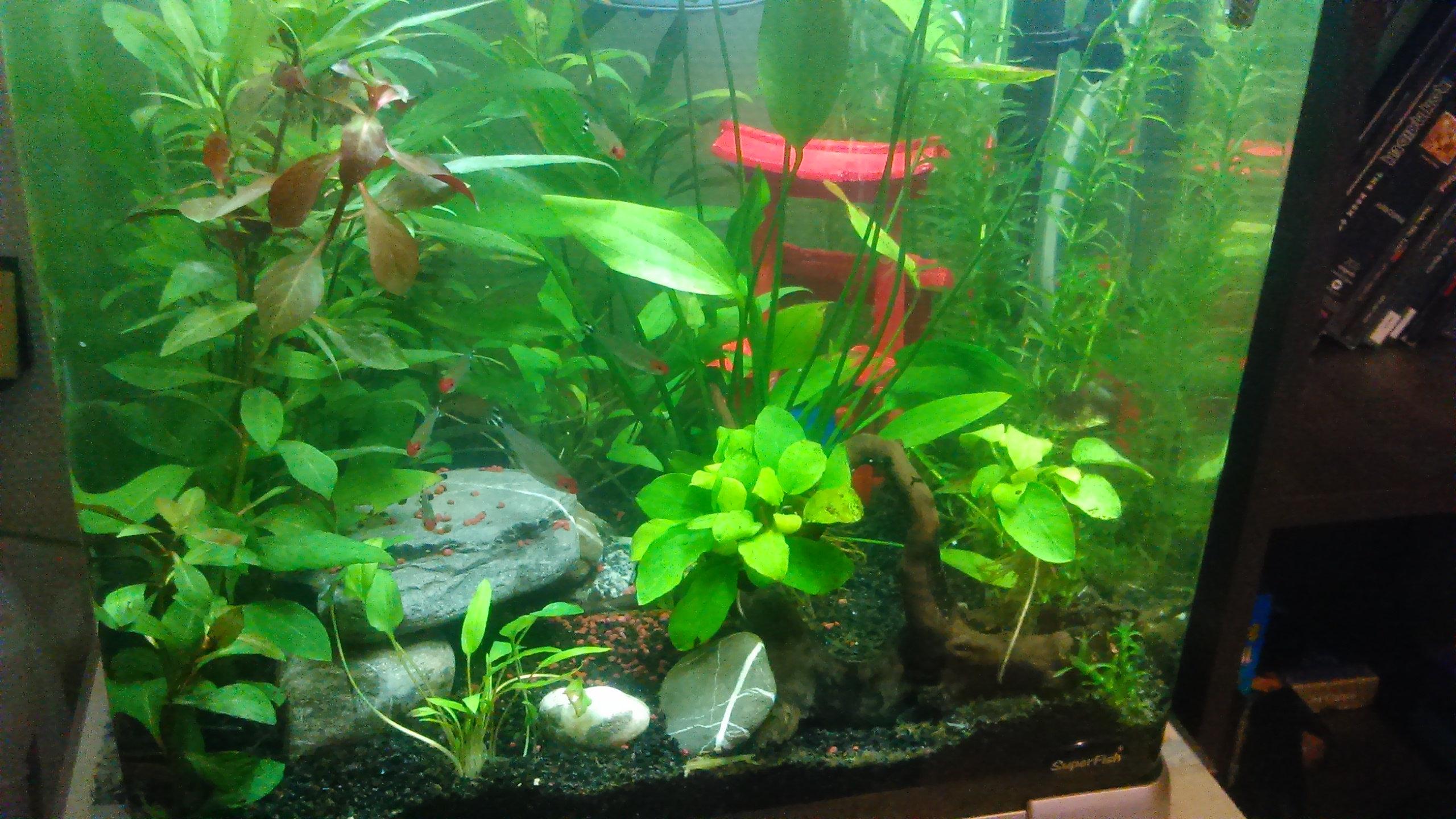 plus de place à cause des plantes