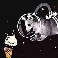 Aki' the Space Corgi