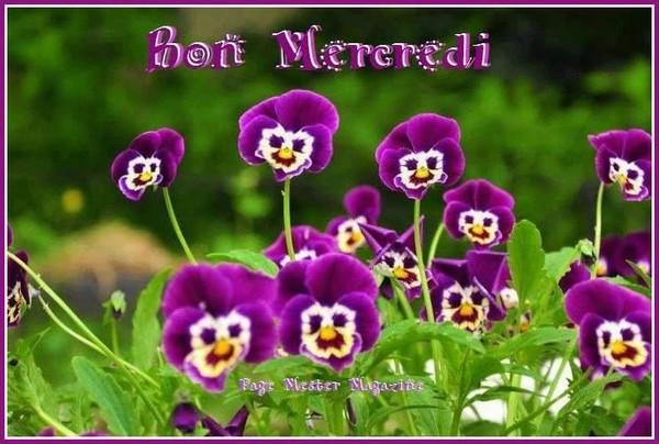 -------------------------------------------------------------------------------------------------bonne journée à tous. dans bon mercredi naw4