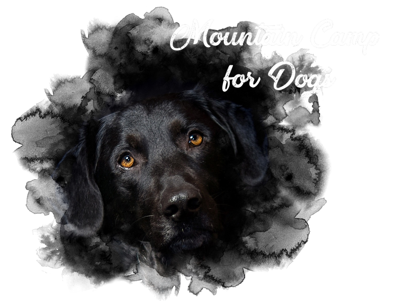 Mountain Camp for Dogs