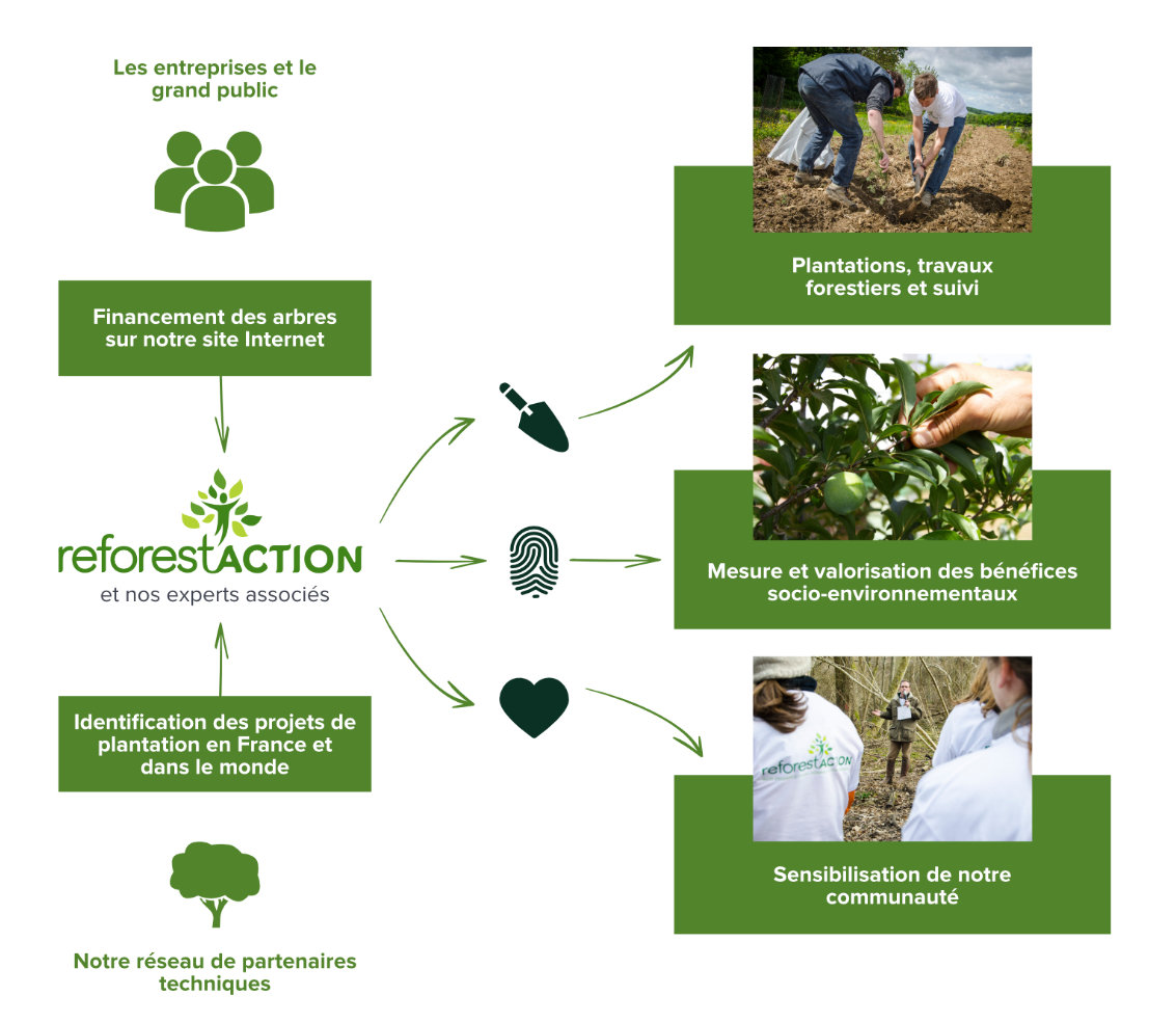 actions reforestation ReforestAction