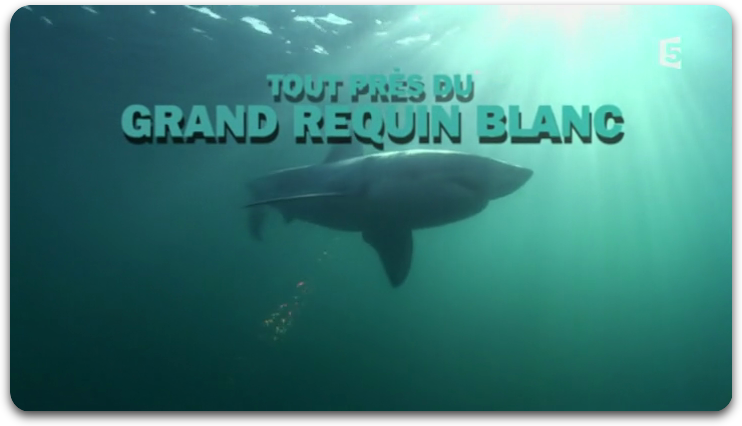 [Multi] Tout près du grand requin blanc [TVRiP]