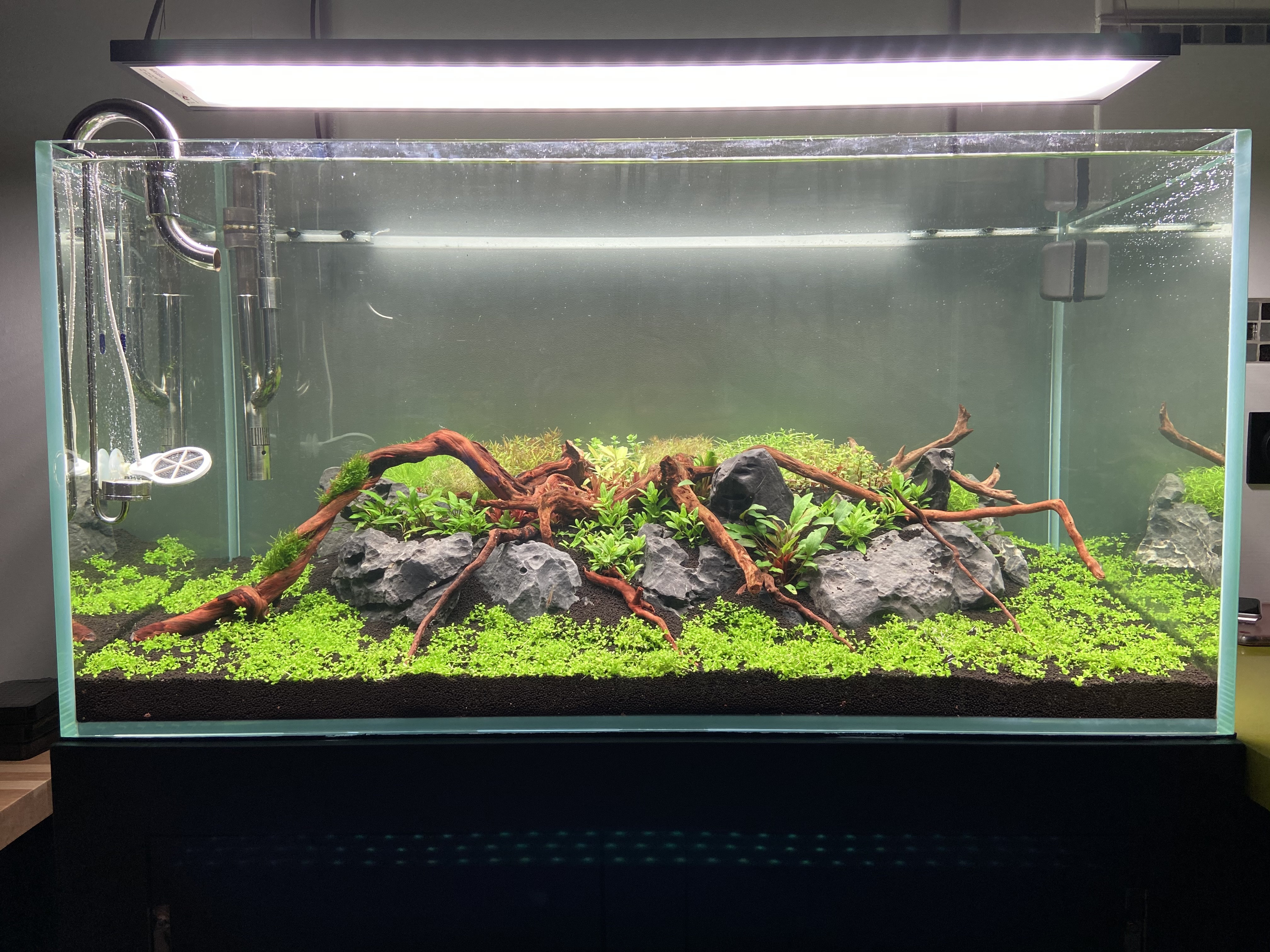 Aquascaping 180L éclairage wrgb II Erby